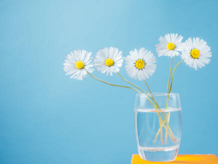 Bunch of daisies in a vase placed on a small yellow table - CAVF82110