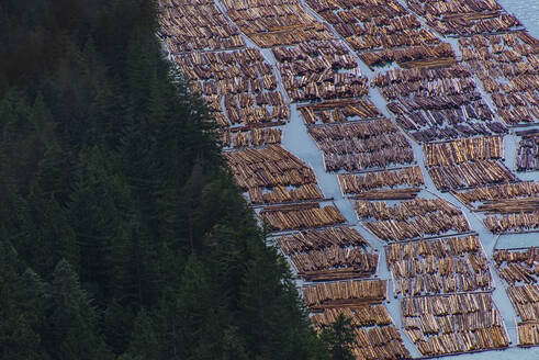 Logging wood floating on water next to forest in Squamish Canada - CAVF82316