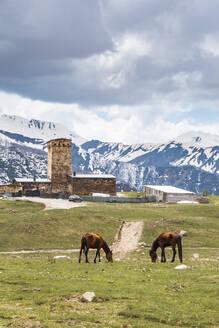 Georgia, Svaneti, Ushguli, Horses grazing in front of medieval village - WVF01722
