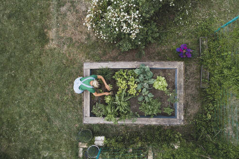 Aerial view of mid adult woman planting in raised bed at yard - HMEF00947
