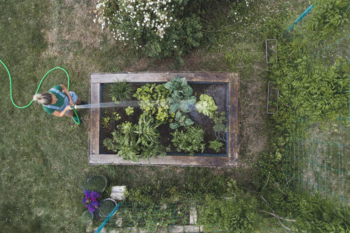 Drone shot of woman watering plants growing in raised bed - HMEF00953