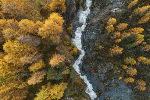Switzerland, Canton of Grisons, Drone view of Orlegna river canyon surrounded by larch forest in autumn - RUEF02955