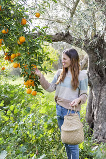Woman picking oranges while standing in organic farm - LVVF00029