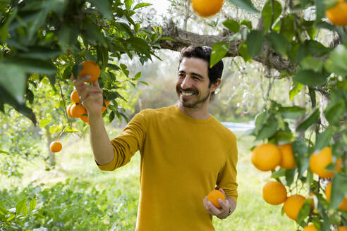 Smiling mature man picking oranges while standing in organic farm - LVVF00038