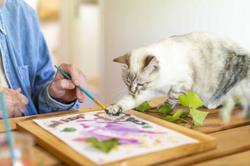 Cat painting with senior man on paper at home - AFVF06499
