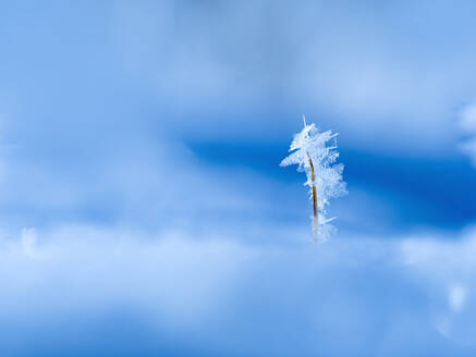 Small ice crystals - BSTF00178
