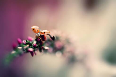 Close-up of ladybug crawling on plant - BSTF00181