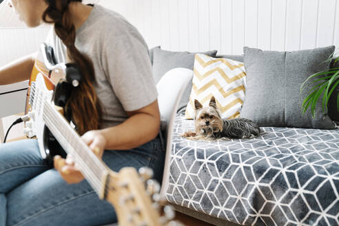 Yorkshire Terrier lying on sofa while woman playing guitar at home - JMHMF00054