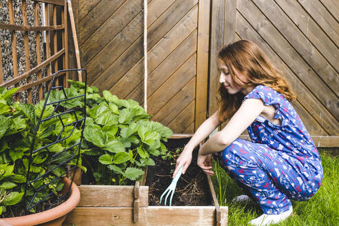 Girl planting basil in raised bed at yard - IHF00347
