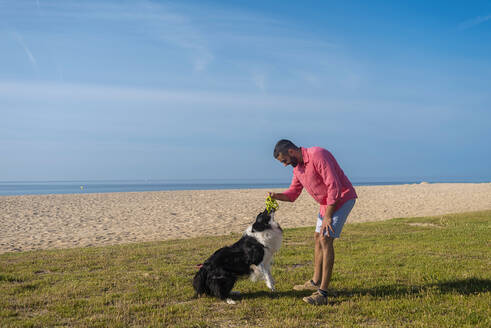 Bearded man playing with dog at beach in sunny day - CAVF84993
