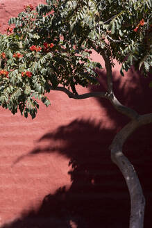 Flowering tree against wall during sunny day - PSTF00774