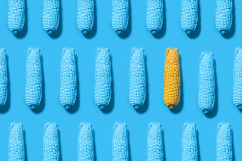 Pattern of rows of blue painted corns with single yellow one - FLMF00244