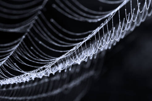 Close-Up Of Spider Web On Black Background - EYF06923