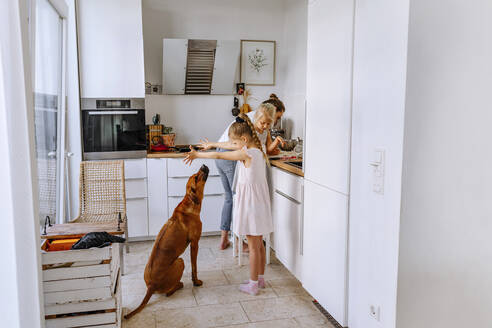 Mother preparing cheesecake while girls playing with dog in kitchen - OGF00448
