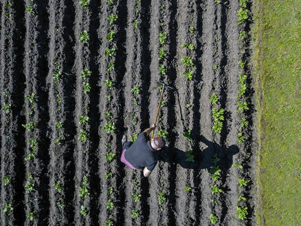 Aerial view of man working on potato field - KNTF04719