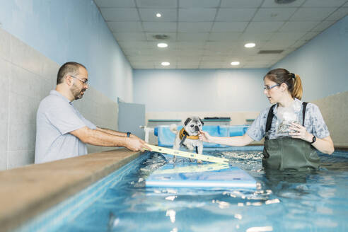 pug dog doing exercices swimming in a pool in a physiotherapist dogs center - GMLF00281