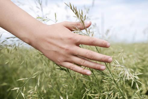 Boy's hand touching grass, close-up - EYAF01177