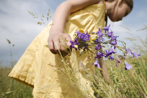 Girl's hand holding picked bellflowers on a meadow - EYAF01186