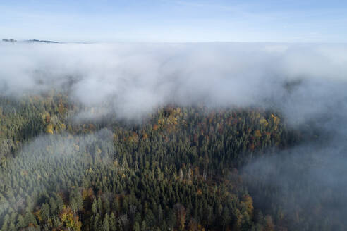 Germany, Baden-Wurttemberg, Drone view of autumn forest shrouded in morning fog - RUEF02993
