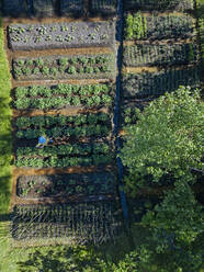 Aerial view of female worker at strawberry field, Tikhvin, Russia - KNTF04738