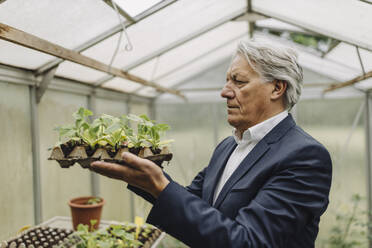Senior businessman holding plants in a seed tray in greenhouse - GUSF04077
