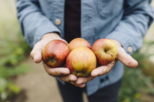 Close-up of man holding organic apples - GUSF04086