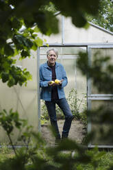 Portrait of a senior man holding organic lemons at a greenhouse - GUSF04167