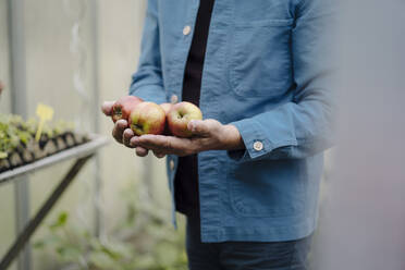 Close-up of man holding organic apples in a greenhouse - GUSF04170