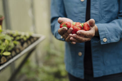 Close-up of man holding organic strawberries - GUSF04179