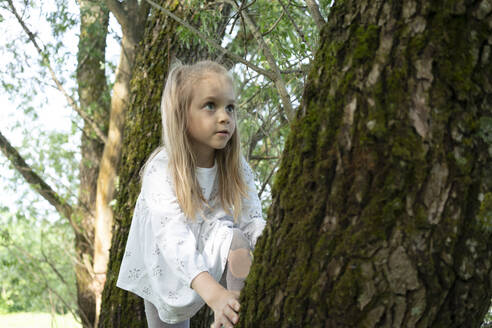 Cute girl climbing on tree in forest - VPIF02567