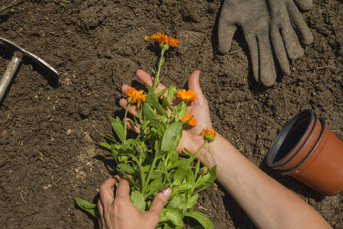 Hands of woman holding flowers on land in garden - SKCF00641