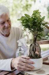 Senior man holding bonsai plant - AFVF06711