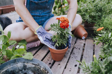 Close-up of mid adult woman planting flower in pot while sitting at garden - EBBF00448