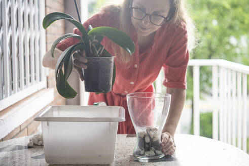 Mid adult woman planting orchid plant in pot on table - SKCF00651