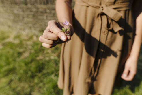 Close-up of woman holding flower on a meadow - GUSF04283