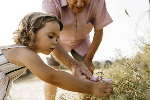 Close-up of cute girl with grandfather picking flowers from plant - JRFF04655