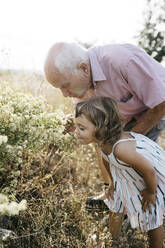 Grandfather with granddaughter smelling flowers in field - JRFF04658
