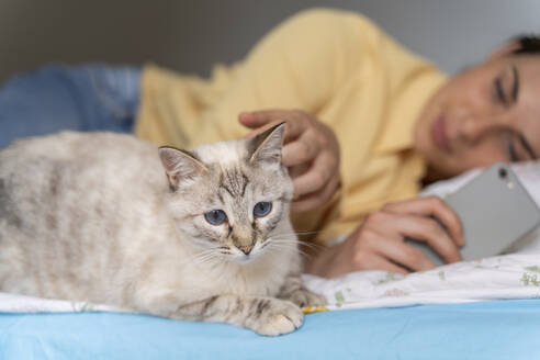 Woman with phone looking at cat while lying in bedroom - AFVF06859