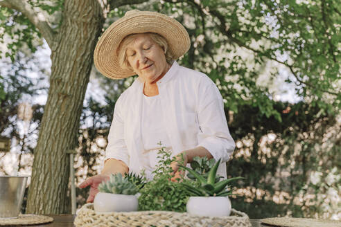 Senior woman wearing hat with potted plants on table standing in yard - ERRF04140