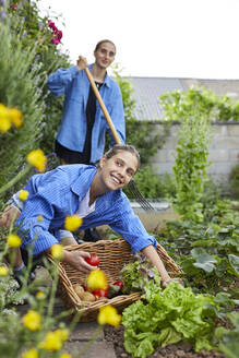 Young woman picking tomatoes while working with friend in garden - UKOF00054