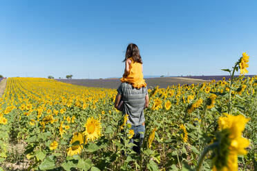 Father carrying daughter on shoulders in sunflower field against clear sky - GEMF04077