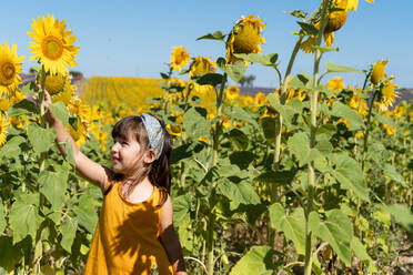 Cute girl admiring sunflower in field during sunny day - GEMF04080