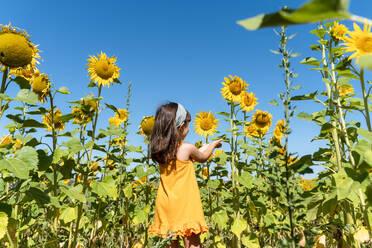 Girl admiring sunflower in field against clear blue sky - GEMF04083
