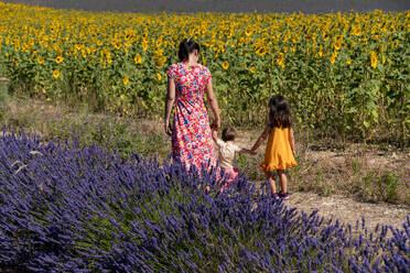 Mother with daughters walking between lavender and sunflower field during summer - GEMF04092