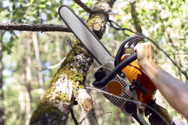 Hands of lumberjack cutting branch with chainsaw in forest - VEGF02769