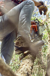 Lumberjack holding chainsaw while standing with leg on branch in forest - VEGF02772