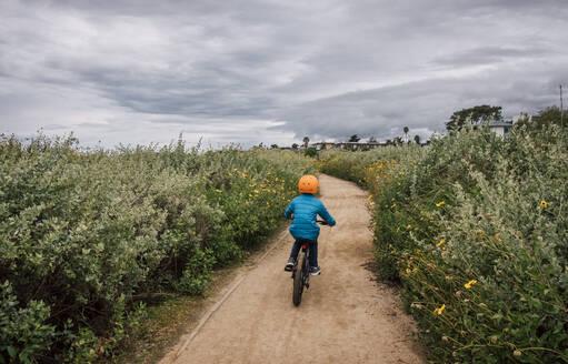 Rear view of boy cycling along a path with Bush Sunflower, Encelia californica, growing either side, near Santa Barbara, California, USA. - CUF56474
