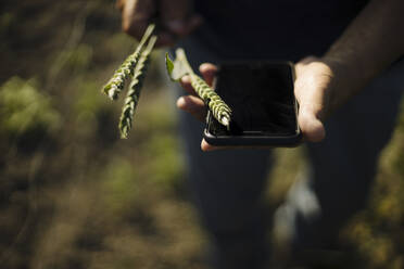 Man holding crop with smart phone in field - GUSF04377
