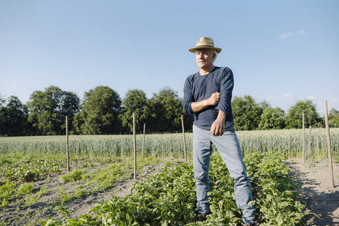 Thoughtful man looking away while standing against clear blue sky in agricultural field - GUSF04392
