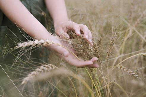 Girl's hands touching wheat ears - EYAF01265